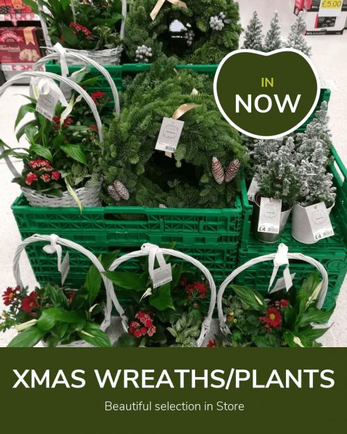 Xmas plants poster